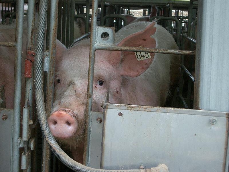 「もっとたくさん、安く食べたい」人間は正しいのか? 動物権利団体に聞く、生き物を食べるということ