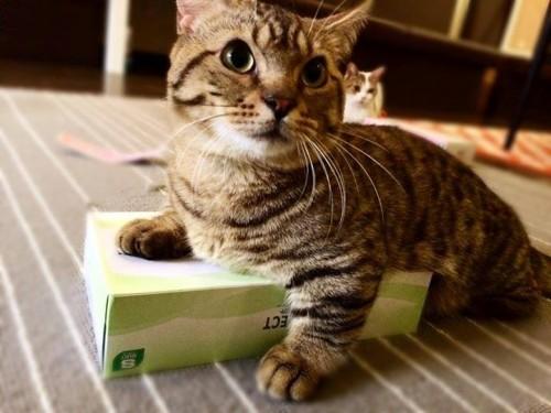 猫をお持ち帰りできるカフェに潜入取材