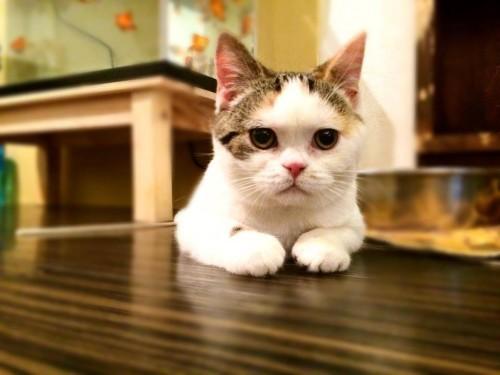 猫をお持ち帰りできるカフェに潜入取材2