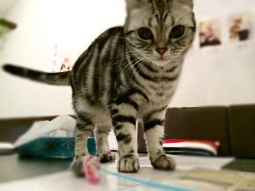 猫をお持ち帰りできるカフェに潜入取材4