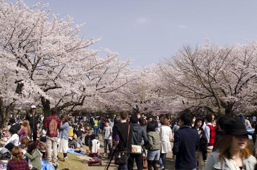 お花見が一転ガチンコ料理バトルに! 桜とともに散った恋の失敗談3連発