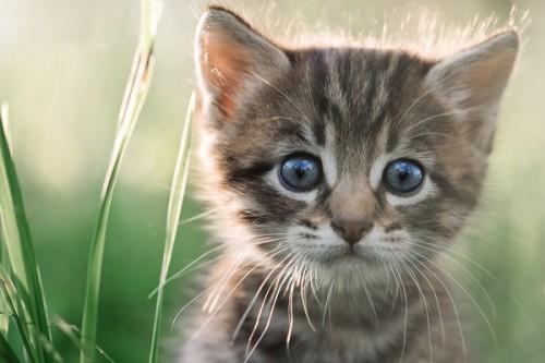 猫が行動で示すの本当の意味とは