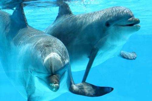 イルカに囲まれて出産