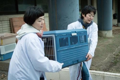 犬を檻に閉じ込め近親交配…悪質ブリーダーとペットショップが減らない理由