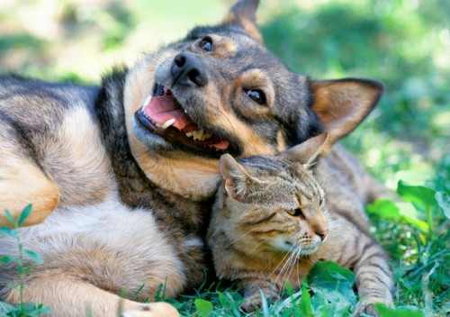 犬猫の殺処分ゼロに成功事例も