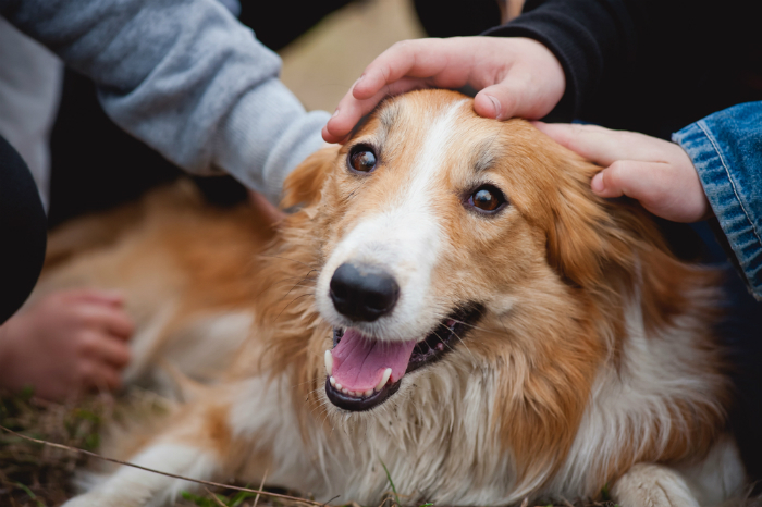救える命がそこにあるー犬猫の殺処分ゼロ実現のために、私たちができること