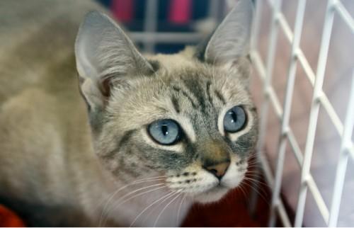 4500匹以上の猫を殺処分から助けた NPO法人が作った救済システムとは