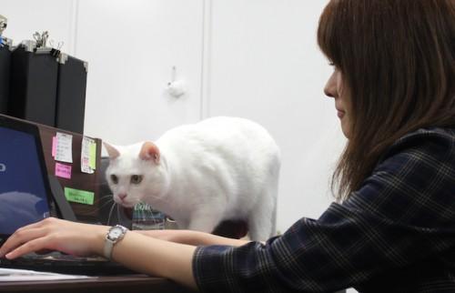 """猫が""""専務""""の会社に潜入 社長は語る「飼育のデメリットが、社内交流の活性化に繋がる」"""