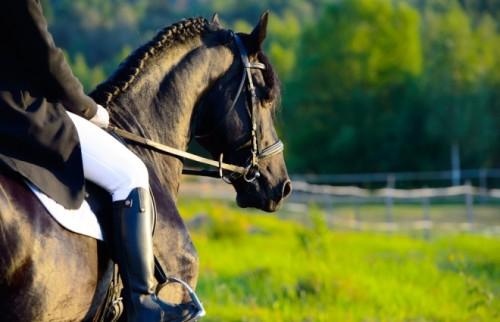 女が馬に乗れない時代に、男装して男所帯に潜り込む…本当にあった女性騎手の物語
