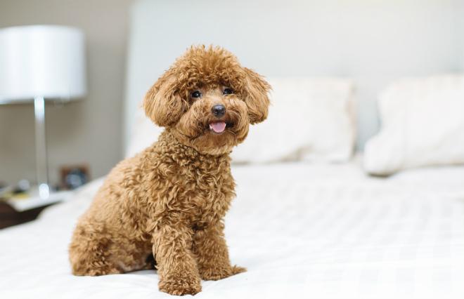 ペットの治療に21万…お金がない! そんな事態を防ぐ、月460円からの「ペット保険」って?