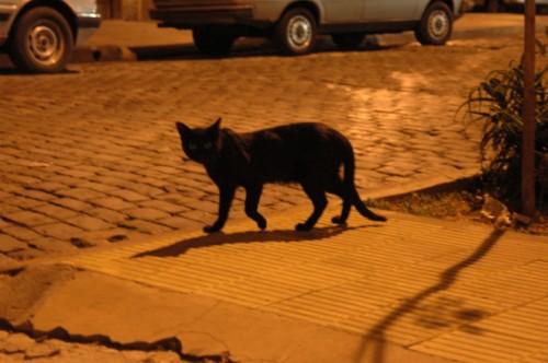 ¡Viva! Photodays vol.02「ブエノスアイレスの猫公園」