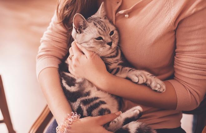 なぜ、女性は男性の約3倍もペットにお金をかけるのか? 猫ブームを数字で見てみると