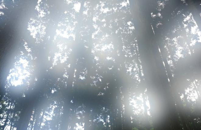 【女のひとり旅】樹齢7000年の屋久杉に逢うために 午前3時の暗闇を歩く
