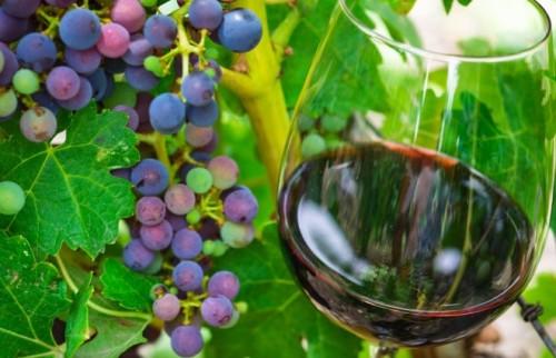 ワイン好きなら要チェック 今「ドイツの赤」に世界が熱い視線
