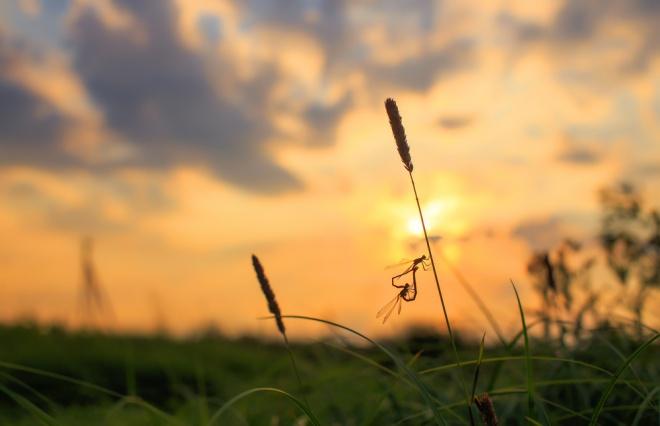 秋の澄んだ空は、遠い? 美しい? ウートピで短歌を大募集