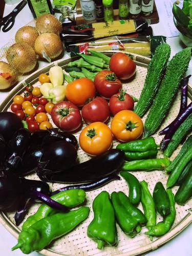 おすそ分けしてもらった夏野菜たちr2