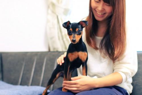 淳子さんとミニチュア・ピンシャーのココ(女の子・4ヶ月)