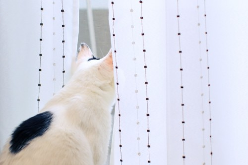 窓際は鈴之助お気に入りの場所。