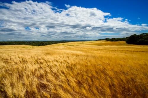 無辺に広がる空と大地に癒されたい! チェコ・モラヴィアの旅