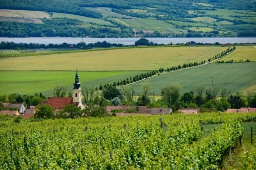 パラヴァの丘に広がるブドウ畑。