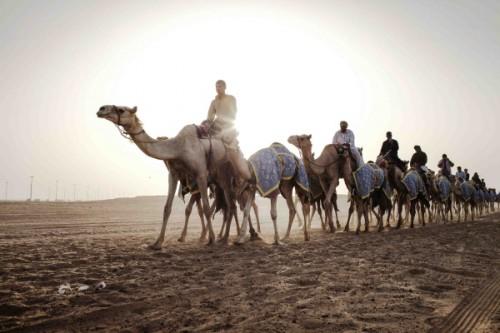 6_CULTURE - Camelsr
