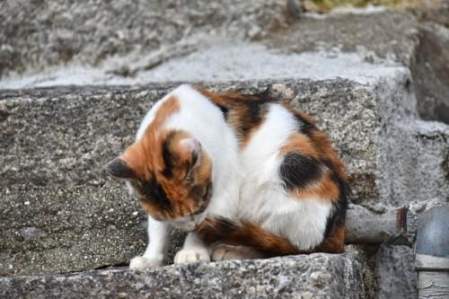 尾道といえば猫。宝土寺入口にも。