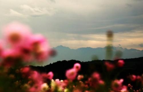 top_花と山の風景