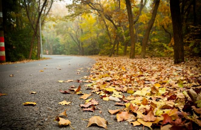秋風で思い出しちゃいそうになる 自分に蓋をして歩いてる【ウートピ短歌結果発表】