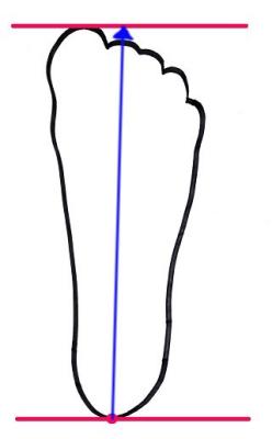 ↑青線の長さを測れば、それが自分の足長です。
