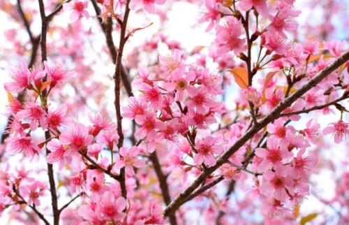 間違った花粉症対策していない?耳鼻咽喉科医に聞いた花粉症のウソ・ホント