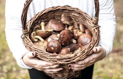 食べ過ぎを防ぐ秋の低カロリーメニュー【管理栄養士が教える】
