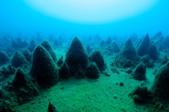 南極の湖の底に広がる光景。藻やバクテリアが長い時間かけて円錐形の塊を築き上げた。こういう光景を目にした瞬間が、研究者としてもっとも幸福だと言う。