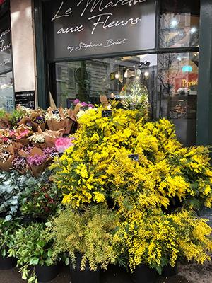 ミモザが売られている仏パリの生花店=川原好恵撮影