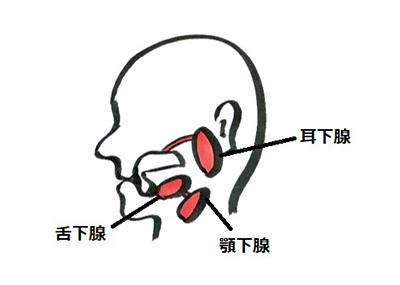 唾液腺_江上医師