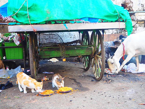猫とヤギ。スパイス、健康に悪そうですけど……。