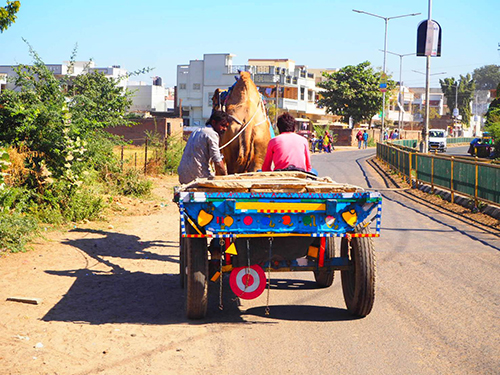 この辺りは田舎だからなのか、ラクダやゾウ、ロバなどが労働力のひとつとして駆使されていた。