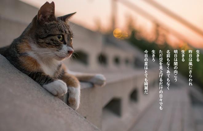 作詞家・及川眠子『猫から目線』が発売。未発表の詩を特別公開