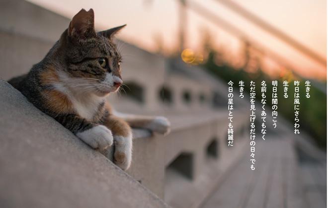 『猫から目線』より