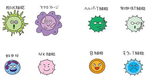 獲得免疫細胞2