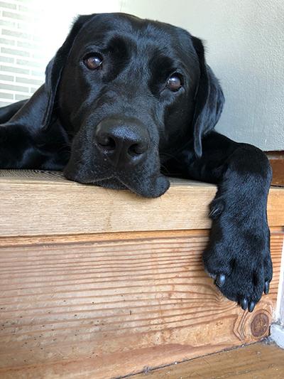 村井さんちの愛犬・ハリー
