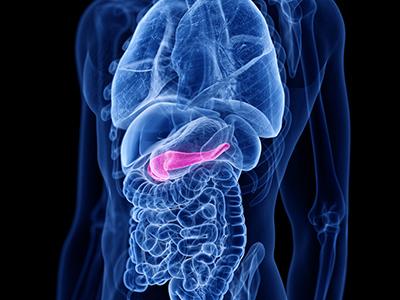 膵臓の位置(イメージ)